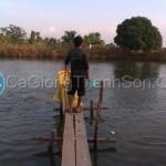 Ao nuôi cá thịt (cá nàng hai)