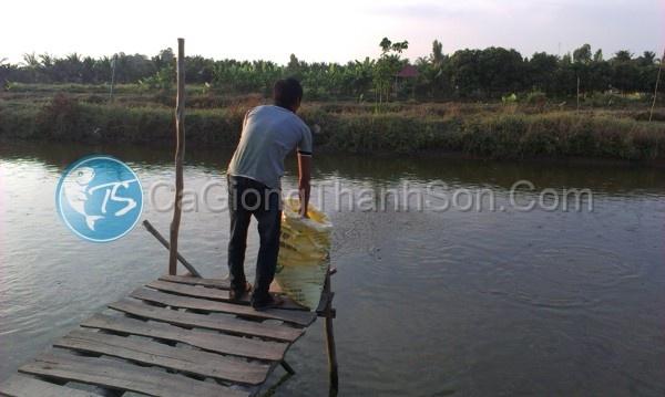 Ca Nang Hai - Thac Lac Cuom